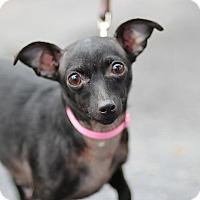 Adopt A Pet :: Mandara - Midland, MI