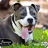 Adopt A Pet :: Stanford - Orlando, FL