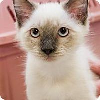 Adopt A Pet :: Adam - Irvine, CA