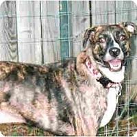 Adopt A Pet :: Jenny - Kingwood, TX
