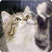 Adopt A Pet :: Mozelle - Davis, CA