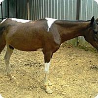 Adopt A Pet :: Sassy - Waleska, GA