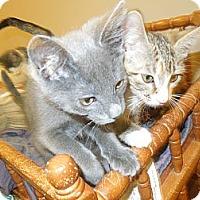Adopt A Pet :: Bates - Medina, OH