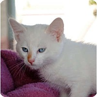 Adopt A Pet :: Cotton - Palmdale, CA