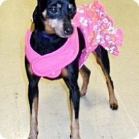 Adopt A Pet :: Ellen - Sacramento, CA