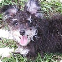 Adopt A Pet :: JUNIPER - Melbourne, FL