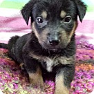 Adopt A Pet :: Gabe