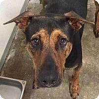 Adopt A Pet :: Vito - Visalia, CA