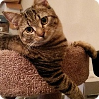 Adopt A Pet :: Biscuit - Broomall, PA