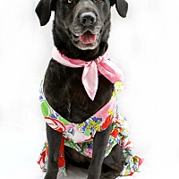 Adopt A Pet :: Elodie is a PRIZE!! - Los Angeles, CA