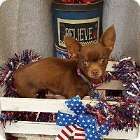 Adopt A Pet :: Linda - Acushnet, MA