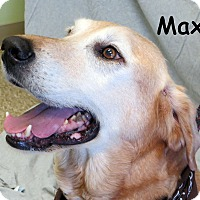 Adopt A Pet :: Max - Warren, PA