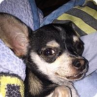 Adopt A Pet :: Olive - San Marcos, CA