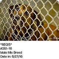Adopt A Pet :: Regis - Urgent! - Zanesville, OH