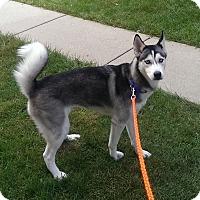 Adopt A Pet :: Loki - Crystal Lake, IL