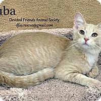 Adopt A Pet :: Ruba - Ortonville, MI