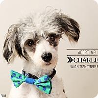 Adopt A Pet :: Charles - Omaha, NE