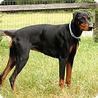 Adopt A Pet :: ASHA - Greensboro, NC