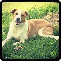 Adopt A Pet :: Chambers - Grand Bay, AL
