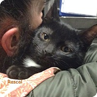 Adopt A Pet :: RASCAL - Cliffside Park, NJ