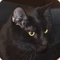 Adopt A Pet :: Mo - Midland, VA