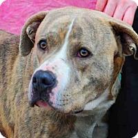 Adopt A Pet :: BARRY - Louisville, KY