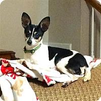 Adopt A Pet :: Kay-leigh (GA) - Atlanta, GA