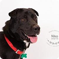 Adopt A Pet :: Niko - Kansas City, MO