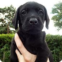 Adopt A Pet :: Jack - west hollywood, CA