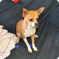 Adopt A Pet :: Rhonda - Tumwater, WA