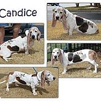 Adopt A Pet :: Candice - Marietta, GA