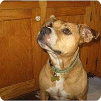 Adopt A Pet :: Clarice *Foster* - Glen Allen, VA