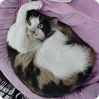 Adopt A Pet :: Sandra D. - Bear, DE