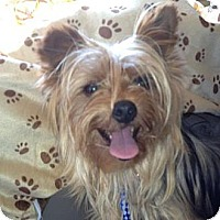 Adopt A Pet :: Lexi - Skokie, IL