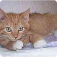 Adopt A Pet :: Theodore - Marietta, GA