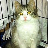 Adopt A Pet :: Grace - Warminster, PA
