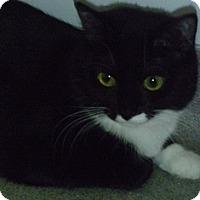 Adopt A Pet :: Miss Paw - Hamburg, NY
