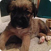 Adopt A Pet :: Sylvia - Russellville, KY