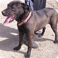 Adopt A Pet :: SASHA - Yucaipa, CA