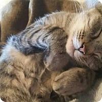 Adopt A Pet :: Tillie - Nesbit, MS