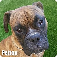 Adopt A Pet :: Patton - Encino, CA