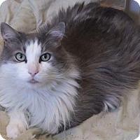 Adopt A Pet :: La Pawz - Ventura, CA