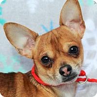 Adopt A Pet :: Jaxon-Neutered/Los cost fees - Red Bluff, CA
