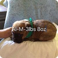 Adopt A Pet :: Al - Buffalo, NY