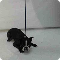 Adopt A Pet :: PRINCE - Orlando, FL