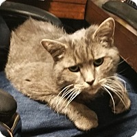 Adopt A Pet :: Smokey - N. Billerica, MA