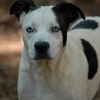 Adopt A Pet :: Sky - Lawrenceville, GA