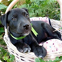 Adopt A Pet :: Leigh Ann - Baton Rouge, LA