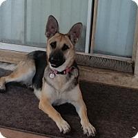 Adopt A Pet :: Emma - Peoria, AZ
