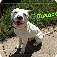 Adopt A Pet :: Chance - Minneapolis, MN